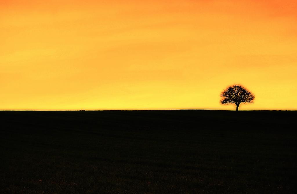 horizon tree
